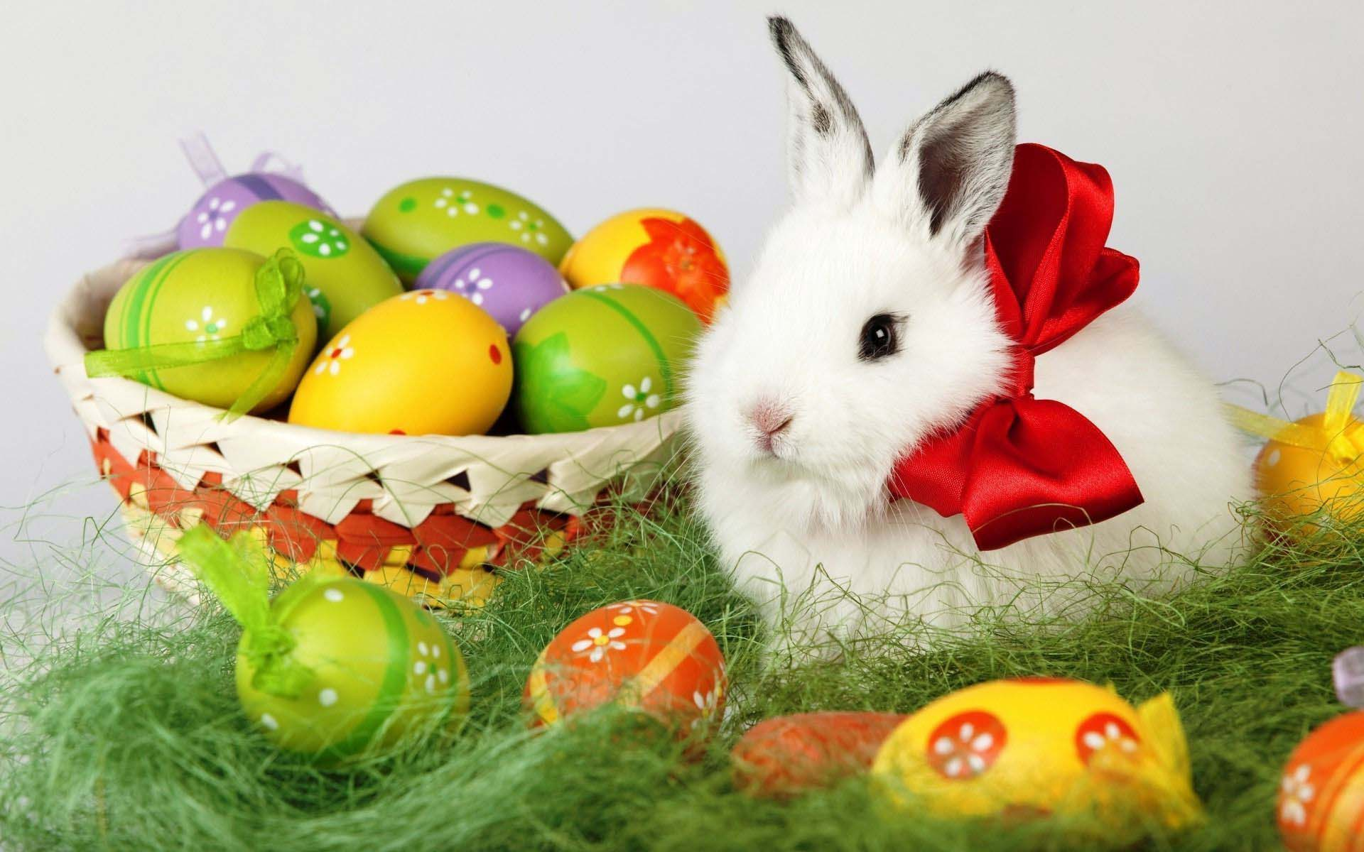Great Real Easter Bunny With