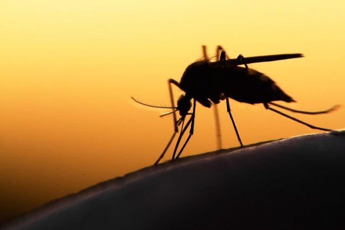 malaria vaccine Mosquirix