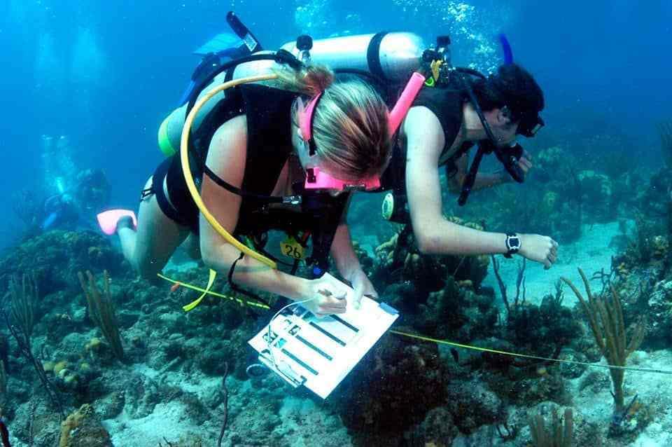 underwater biology