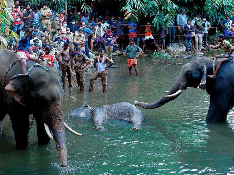 Pregnant elephant dies in kerala