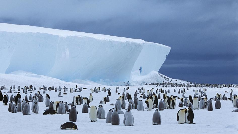 penguin colonies found in Antarctica