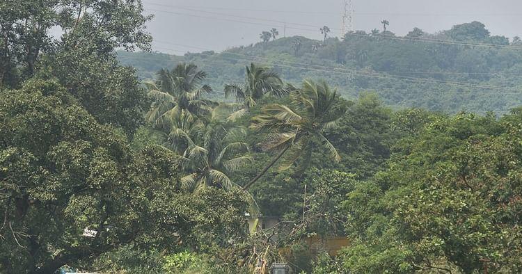 Mumbai Aarey colony, IAF