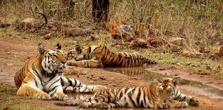Panna Tiger Reserve, UNESCO