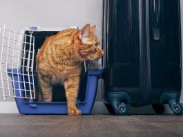 cat travel essential